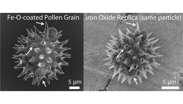 Magnetic pollen replicas