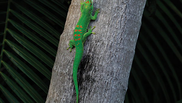 Reusable and Renewable Adhesive Mimics Geckos
