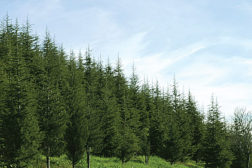 Sustainable Success for Adhesives and Sealants through Biorenewable Feedstocks