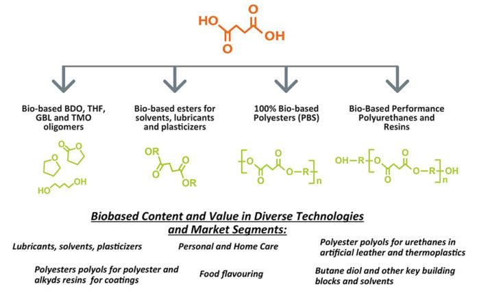 Advancing Adhesives: Bio-Based Succinic Acid Polyester