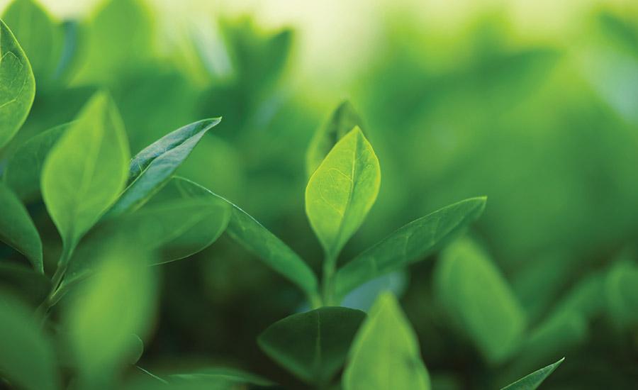 Bio Based Feedstocks For Adhesives And Sealants
