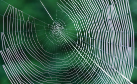 Spider Silk Brings Adhesive Opportunities